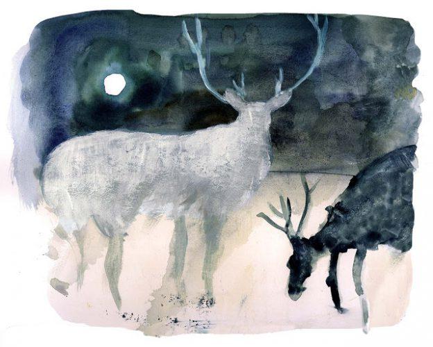 notturno-cervo1